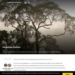 Forgotten forests: a journey to see the forests most often overlooked