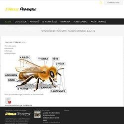 Formation du 27 Février 2016 - Anatomie et Biologie Générale - L'Abeille Provençale