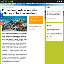 Ile de la Réunion - Formation professionnelle cétacés et tortues marines - mardi 17 juin 2014