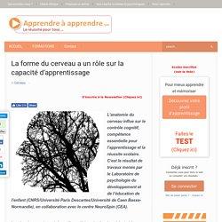 forme du cerveau et apprentissage