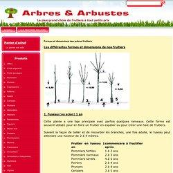 Formes et dimensions des arbres fruitiers
