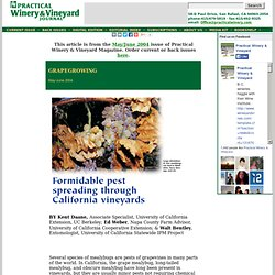 PRACTICAL WINERY & VINEYARD JOURNAL - MAI/JUIN 2004 - Formidable pest spreading through California vineyards
