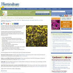 Forsythia Alternatives: Great Spring-flowering Shrubs - HorticultureHorticulture