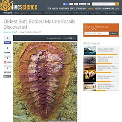 Oldest Soft-Bodied Marine Fossils Discovered