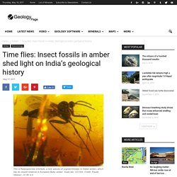 *****Time flies: Insect fossils in amber shed light on India's geological history