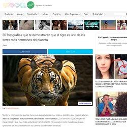 30 fotografías que te demostrarán que el tigre es uno de los seres más hermosos del planeta