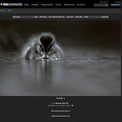 FLAUM - Bild von Michael Seth aus Tiere - Fotografie (21002427)