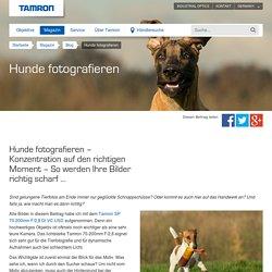 Hunde fotografieren - Tamron Deutschland