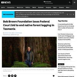 Bob Brown Foundation loses Federal Court bid to end native forest logging in Tasmania