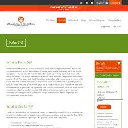 Palm Oil - Orangutan Foundation International Australia