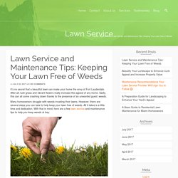 Lawn Service and Maintenance Tips: Keeping Your Lawn Free of Weeds