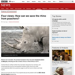 Four views: How can we save the rhino from poachers?