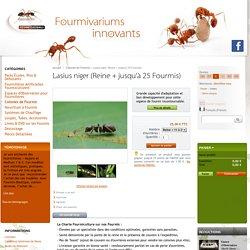 Fourmiculture® : Fabricant de Fourmilières Artificielles de Qualité - Acheter des Fourmis - Lasius niger (Reine + jusqu'à 25 Fourmis)