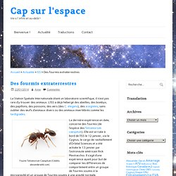 Des fourmis extraterrestres