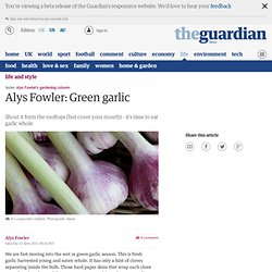 Alys Fowler: Green garlic