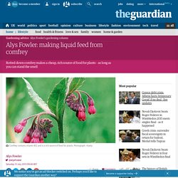 Alys Fowler: making liquid feed from comfrey