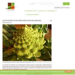 Les fractales et la réitération chez les plantes