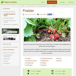Fraisier : Planter, cultiver et récolter