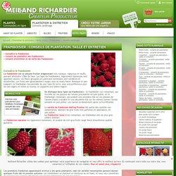 Framboisier : conseils de plantation, taille et entretien