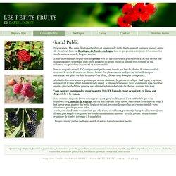 Meilleur framboisier, variétés anciennes, mûres, groseilles, myrtilles, résistantes, jardin, potager, parfum, goût, vente directe, champ - LES PETITS FRUITS