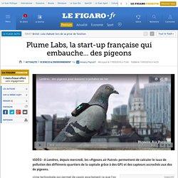 Plume Labs, la start-up française qui embauche... des pigeons