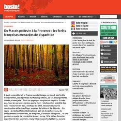 Du Marais poitevin à la Provence : les forêts françaises menacées de disparition