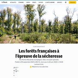 Les forêts françaises à l'épreuve de la sécheresse - Le Monde - 8/09/2020