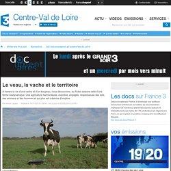France 3 Centre-Val de Loire - Le veau, la vache et le territoire
