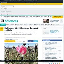 En France, 12 000 hectares de pavot cultivés