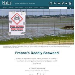France's Deadly Seaweed