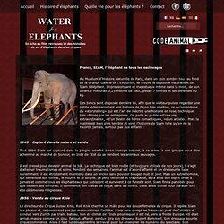France, SIAM, l'éléphant de tous les esclavages