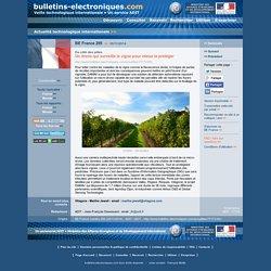 INRA 07/09/15 Des drones pour surveiller les foyers infectieux de la flavescence dorée de la vigne