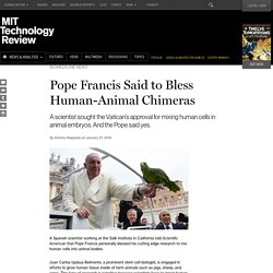 Did Pope Francis Bless Human-Pig Chimeras?
