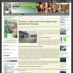 Ennesys, cultiver des micro-algues pour produire de l'énergie