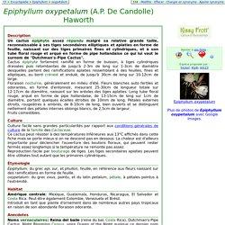 Au Cactus Francophone : Fiche de : Epiphyllum oxypetalum (A.P. De Candolle) Haworth
