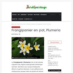 Frangipanier en pot : culture, plantation, hiver