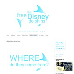 Free the Disney Dolphins: about the dolphins