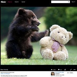 All sizes | Bear freinds