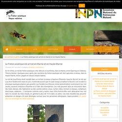 Frelon Asiatique » Le frelon asiatique est arrivé en Marne et en Haute-Marne