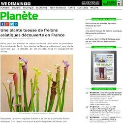 Une plante tueuse de frelons asiatiques découverte en France