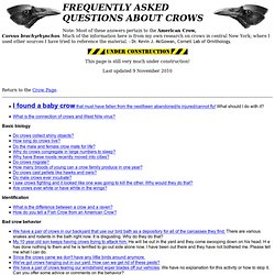 FREQUENTLY ASKED QUESTIONS ABOUT CROWS