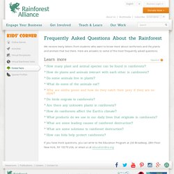 Frequently Asked Questions About the Rainforest