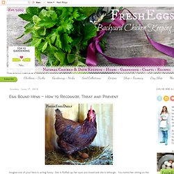 Egg Bound Hens - How to Recognize, Treat and Prevent