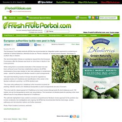 FRESH FRUIT PORTAL 27/11/13 European authorities tackle new pest in Italy