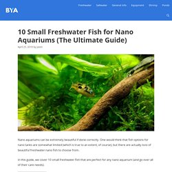 10 Small Freshwater Fish for Nano Aquariums (The Ultimate Guide)