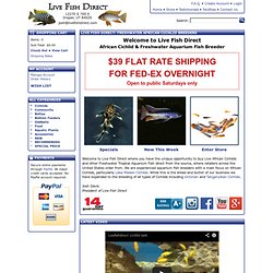 Buy Freshwater African Cichlids at Live Fish Direct: Freshwater Aquarium Fish Breeder