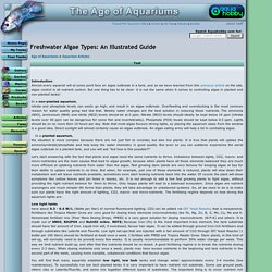 Freshwater Algae Types: An Illustrated Guide - Article at The Age of Aquariums - Tropical Fish