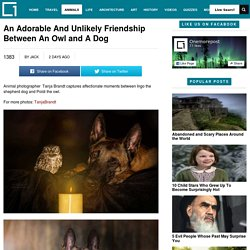 An Adorable And Unlikely Friendship Between An Owl and A DogOnemorepost