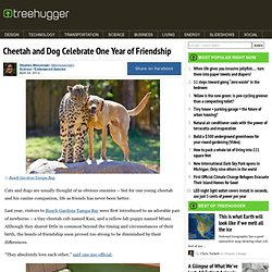 Cheetah and Dog Celebrate One Year of Friendship