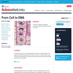 From Cell to DNA